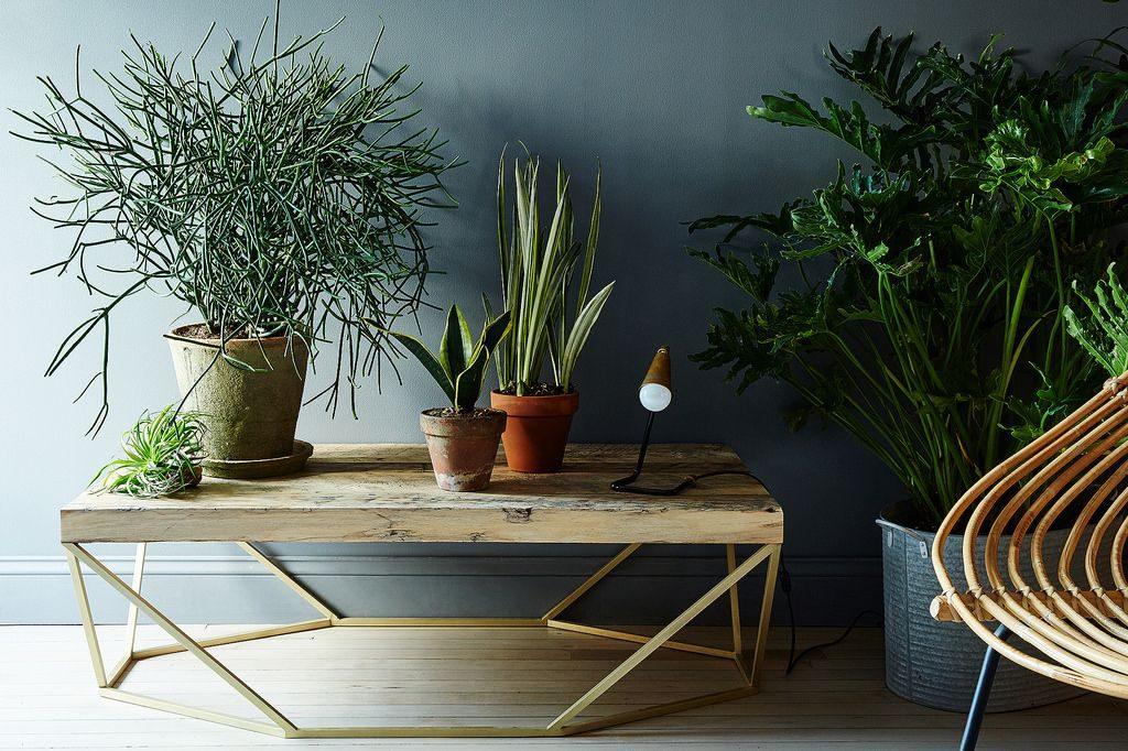 Kantoor planten tips