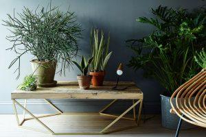 planten als interieurtrend